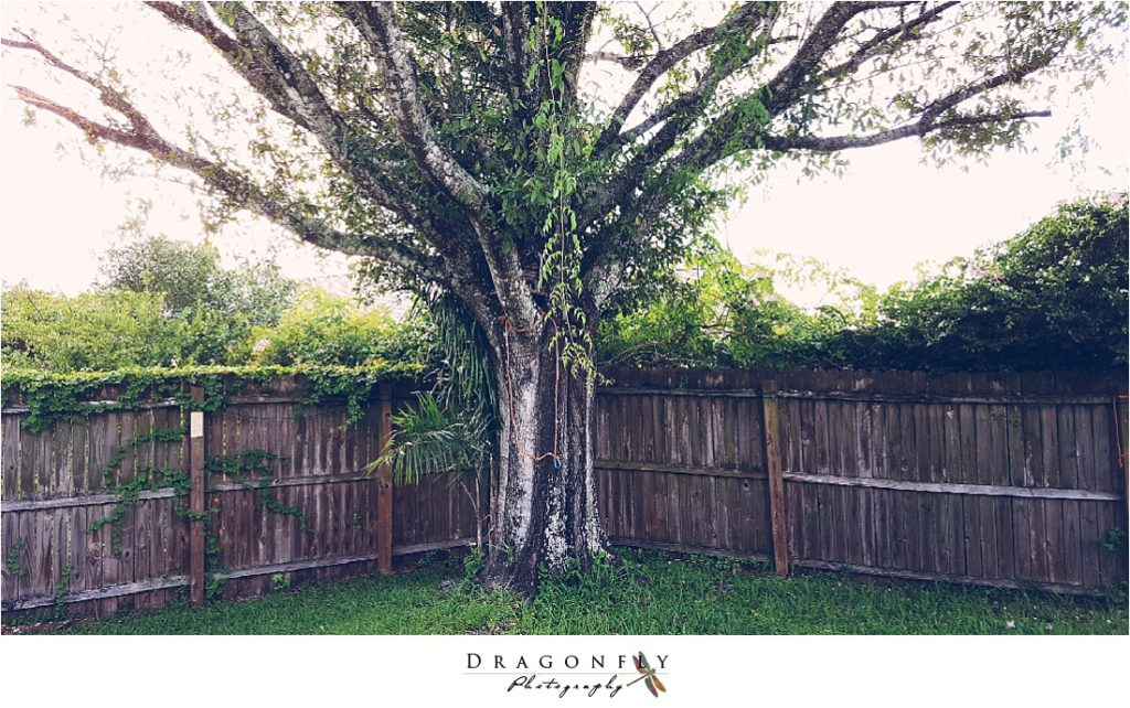 dragonfly-photography-why-a-wedding-photographer-west-palm-beach_0067