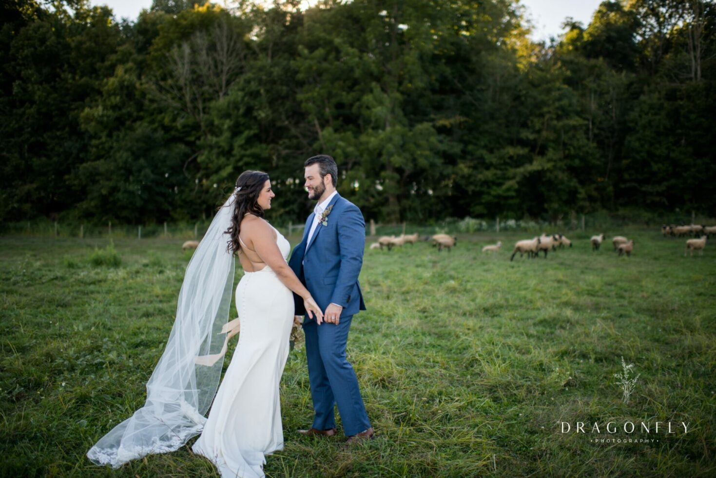 bride and groom with sheep at The Rural Society in ohio